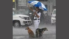 La apasionada foto de un oficial de policía que alberga a dos perros bajo su dosel.