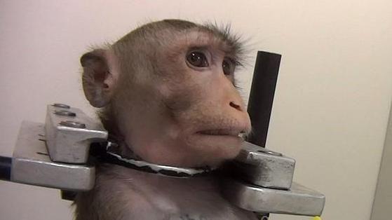 Urla e dolore in Germania: l'inferno di cani, gatti e scimmie in un laboratorio farmacologico