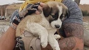 English soldier after seven months finds the dog he saved in Syria