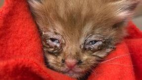 Por vários dias ele ouve barulhos estranhos na parede e descobre um gato preso em uma cavidade