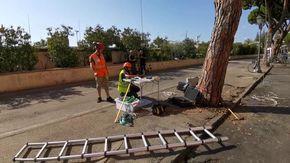 A Sanremo prove del vento per salvare gli alberi