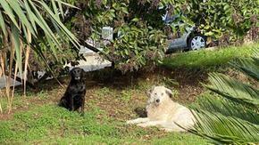 Cani del vicinato, quindi un comune salernitano ha abolito i cani randagi