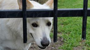 Il cane fa cadere la colf: i padroni di casa devono pagare i danni?