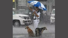 La commovente foto dell'agente di polizia che dà rifugio a due cani sotto il suo ombrello