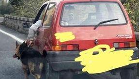 Conduire la voiture portant le chien en laisse le long de la route nationale Appia à Bénévent, colère sur les réseaux sociaux