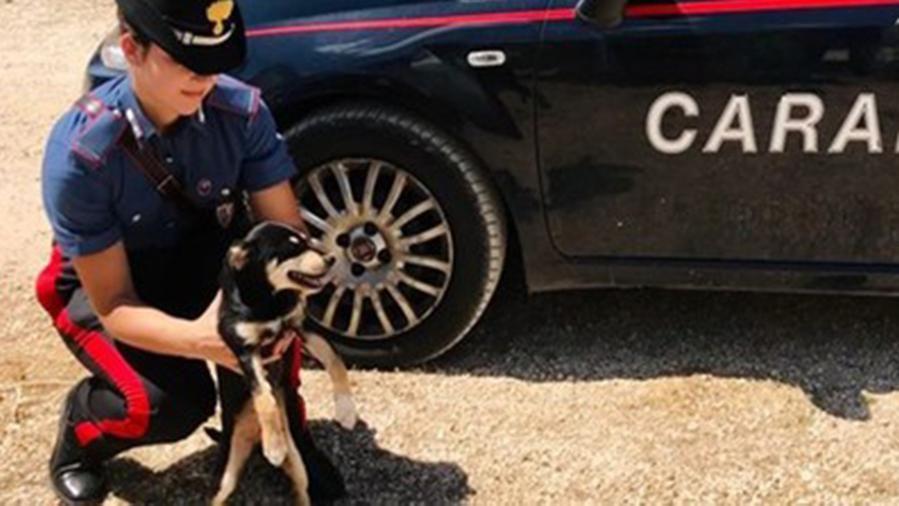 Cane legato a un tronco sotto il sole e senza cibo, salvato dai carabinieri nel Foggiano
