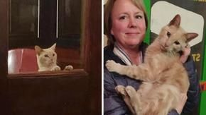 A couple goes out to dinner and returns home with a cat met on the street