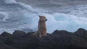 The story of Noorung, the faithful dog who lived on a rock for a year waiting for its owners