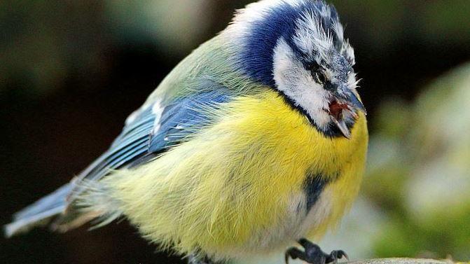 Misteriosa morte di 11 mila uccelli, in Germania si teme una malattia sconosciuta