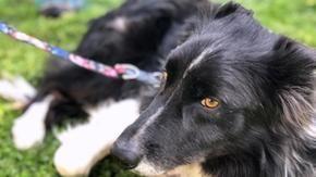 Max, el perro cuyo dueño anterior casi se ahoga en el mar, encontró una familia