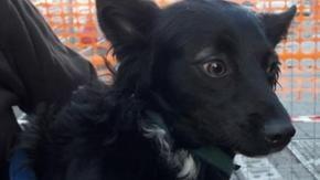 La storia di Nerino, il cane venduto per 5 euro dal suo