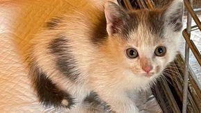 Cucciolo di gatto viene gettato da un finestrino di un'auto in un fiume, salvato dai vigili del fuoco
