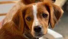 Hunter shoots blindly and kills another hunter's dog, denounced