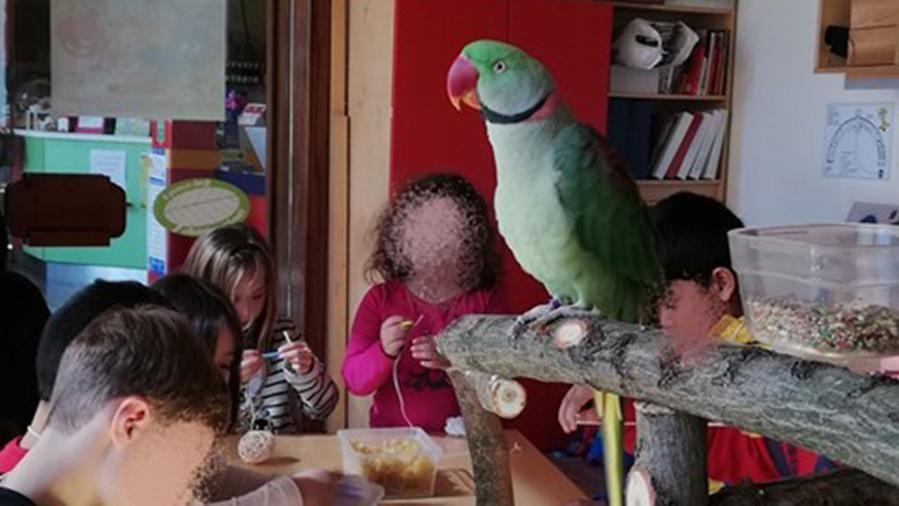 I pappagalli Alex e Pixel entrano nel reparto pediatrico per attività didattiche con i bambini dell'ospedale di Treviso