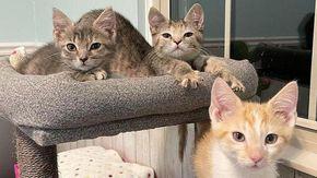 Tre gatti cambiano vita grazie a una donna e ai suoi due mici