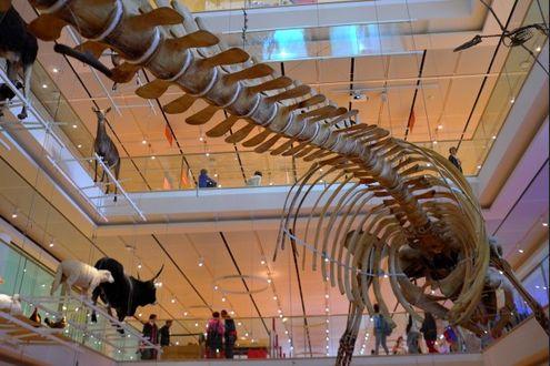 dinosauro dating polemica