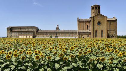 Parma, l'abbazia di Valserena avvolta dai girasoli - foto