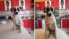 Vivere con l'ansia di separazione, l'amore del cane Toby che piange ogni volta che il suo proprietario esce di casa