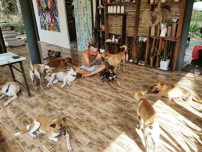 Coppia cambia vita e si trasferisce in Thailandia per salvare cani randagi