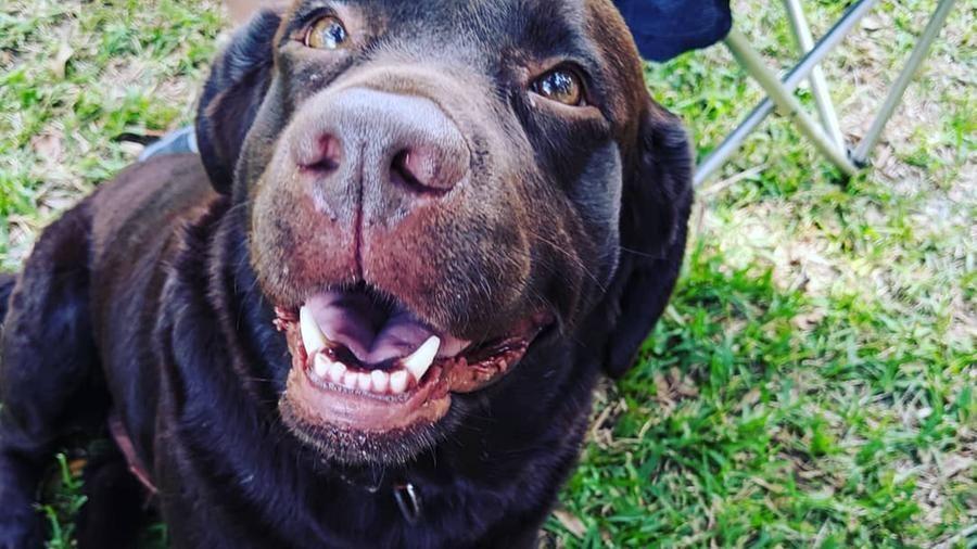 Frasi Sui Cani Trovati.Un Cane Si Intrufola A Una Festa Per Chiedere Cibo Ma L Etichetta