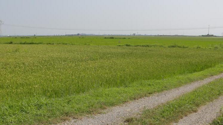 Velocità datazione Vietnam la datazione Carbon-14 è usata per determinare letà della terra