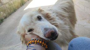 """Lenticchio, il cane """"dimenticato"""" in canile per 11 anni cerca famiglia"""