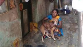 Coronavirus, an Indian woman eats only once a day to take care of her 13 dogs