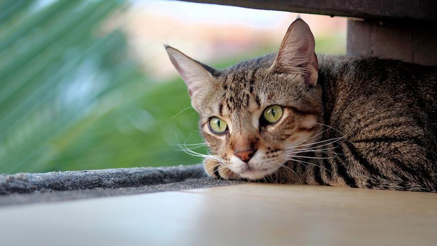 Trovati 7 gatti rinchiusi in un muro: è in corso un'indagine