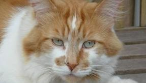 Rubble turns 32: is he the oldest living cat in the world?