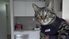 Ecco Arnold, il gatto reclutato dalla polizia per prendere fra i suoi artigli i criminali