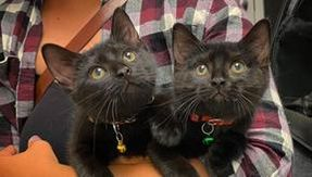 Due gattine trovate in un cortile insieme sono inseparabili e hanno un'amicizia speciale