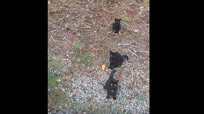 Quanti gatti conti in questa foto? L'illusione è molto felina