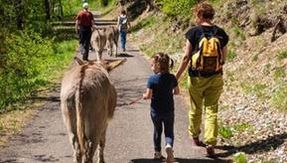 Four abused and auctioned donkeys are now making children play in Trentino