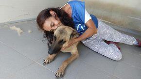 E' in Piemonte la speranza per Lula, il cane Pastore Tedesco trovato denutrito e in catene in Sardegna