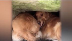 Il cane rimane con la testa incastrata sotto una roccia: ci sono volute 20 ore per liberarlo