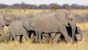 Il coronavirus mette in forse la riapertura della caccia in Botswana