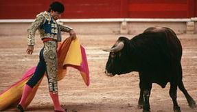 Colombia, Bogota against bullfighting: bull abuse is forbidden