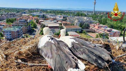 """Maltempo, a Rozzano il nubifragio """"sfratta"""" coppia di cicogne da torre alta 50 metri, i vigili del fuoco rimettono il nido a posto"""