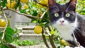 Those happy cats who live in the Lipari refuge had been abandoned on the streets of the island