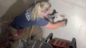 Cane scomparso da 5 giorni viene ritrovato incastrato fra due muri, i vigili del fuoco lo salvano