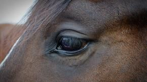 The horror and cruelty hidden behind basashi, the raw horse meat sashimi in Japan
