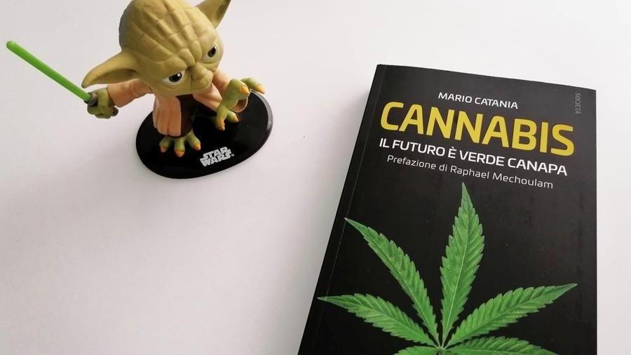 Cannabis. Il futuro sarà verde canapa?