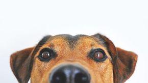 Ebbene sì, il tuo cane capisce quando gli stai dicendo una bugia
