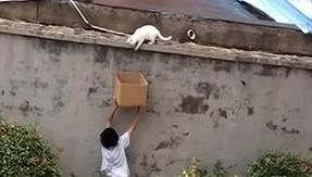Little boy rescues and adopts a cat by handing him a cardboard box