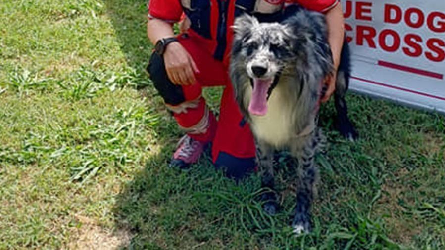Bocconi avvelenati in campagna, due cani della Croce Rossa sono in fin di vita