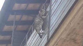 Choc a Firenze: appende il gatto fuori dal balcone, due ragazzi filmano la scena e chiamano la polizia
