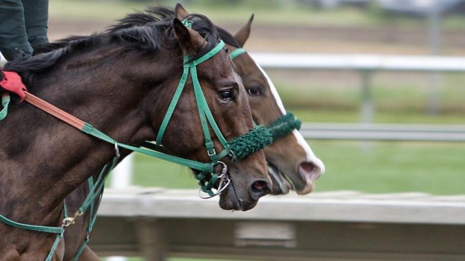 corsa di cavalli btc top 10 scambi cripti nel mondo