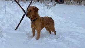 A dog finds someone who needs help in the snow