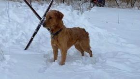 Il cane trova qualcuno che ha bisogno di aiuto nella neve