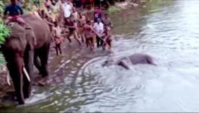 Pregnant elephant killed by